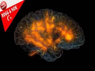 Nancy C. Andreasen _ Cesur Yeni Beyin (Brave New Brain)